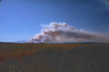 field burning  to control pests