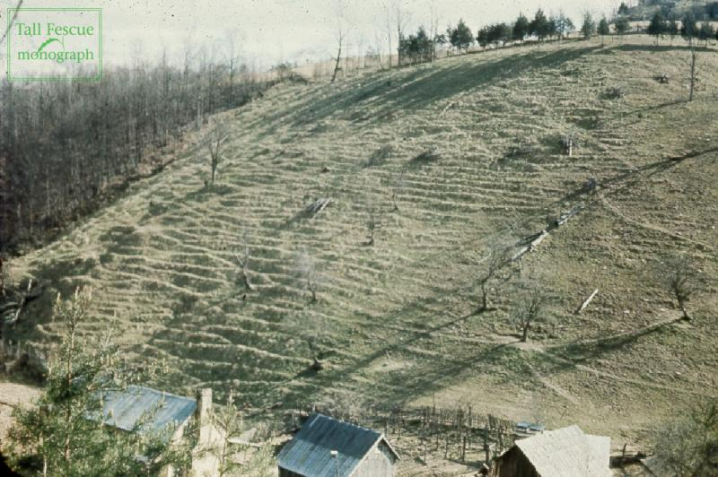 Fig. 1-1. Hillside pasture on William Suiter Farm, Manifee County, KY, from which 'Kentucky-31' seed was selected=