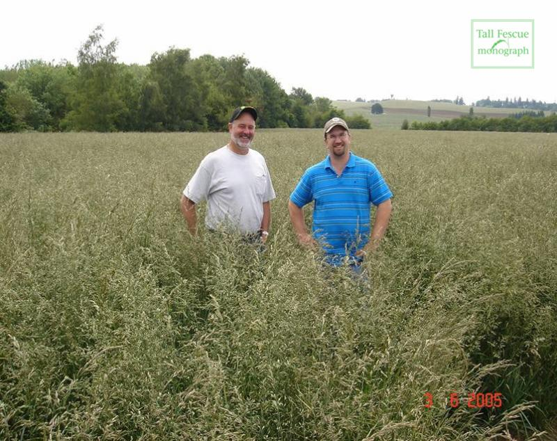 Field of tall fescue for seed production